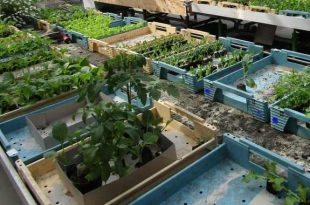 Plantenruildag en compostdemo op zondag 2 juni