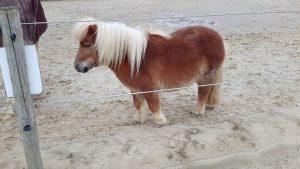 Rian Heeren - Hobby Paarden - (c) Noordernieuws.be - 56980742_3