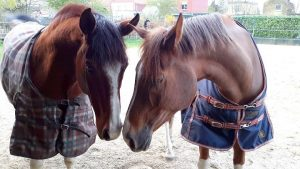 Rian Heeren - Hobby Paarden - (c) Noordernieuws.be - 57038271_4