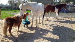 Rian Heeren - Hobby Paarden - (c) Noordernieuws.be - 57154807_2