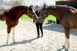 Rian Heeren - Hobby Paarden - (c) Noordernieuws.be - 57204023_4