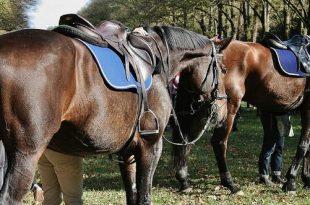 Paardrijden voor mindervaliden in Nispen