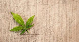 Bedrijfspand half jaar verplicht dicht vanwege drugsactiviteiten