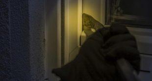Buurtbewoners helpen bij arrestatie inbreker