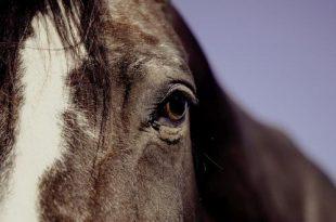 Hoe merk je dat een paard het te warm heeft