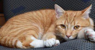 Je hoort miauwen, maar er is geen katje te zien