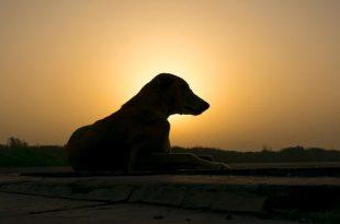 Wat als je hond oververhit raakt