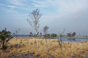 Cursus natuurgids Grenspark Kalmthoutse Heide