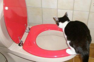 Katten en hun wc-gewoontes - kattenbak