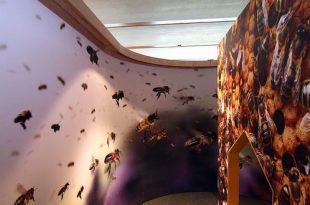 Knutselatelier in het BijenteeltmuseumKnutselatelier in het Bijenteeltmuseum