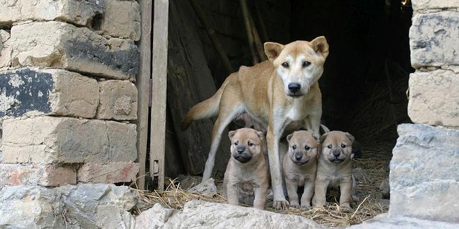 Koop geen honden via de broodfokkers!