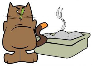 kattenbak vieze luchtjes