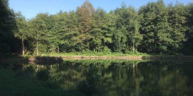 Laag waterpeil gemeentelijke vijver aan Hortensiadreef