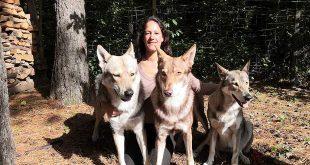 Saarlooswolfhonden van Lisa van Hoof