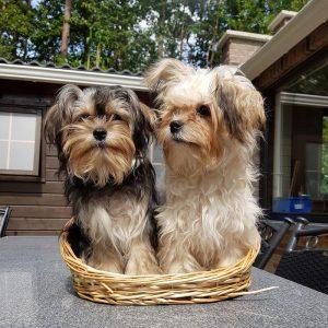 Vergiftigde honden in Woonbos Essen - Noordernieuws.be 2019 - HDB_8191
