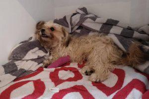 Vergiftigde honden in Woonbos Essen - Noordernieuws.be 2019 - 703