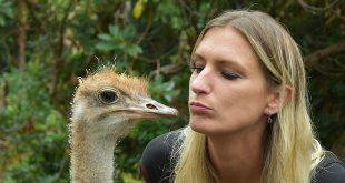 Wendy Adriaens - Kinderanimator - Hobby Struisvogels