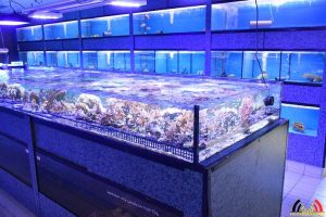 101 Francis Brouwers - Specialist zoetwater en zoutwater aquarium - Roosendaal - (c) Noordernieuws.be 2019 - HDB_8882