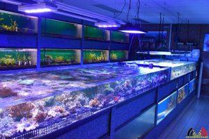 103 Francis Brouwers - Specialist zoetwater en zoutwater aquarium - Roosendaal - (c) Noordernieuws.be 2019 - HDB_8884