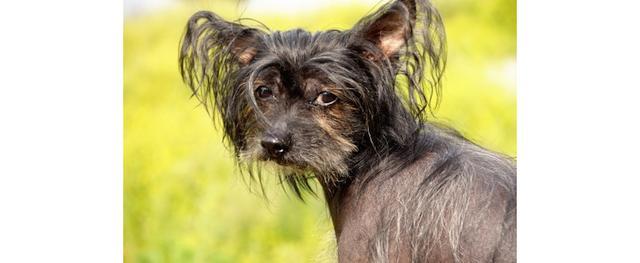Doe normaal, een gezonde hond is niet kaal!