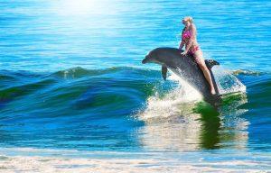 Expedia Group profiteert van wrede dolfijnenattracties