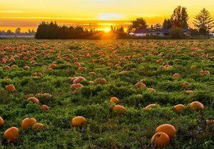 Oktober dit moet je deze maand in de tuin doen2