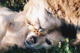 Werelddierendag, maar niet voor de slachtoffers van dierenbeulen