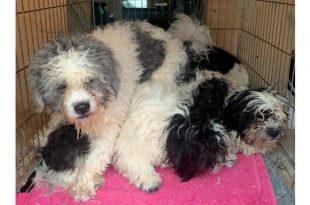 Autochtone honden