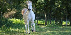 Dit jaar rijdt Sinterklaas op zijn trouwe paard 'Slecht weer vandaag'