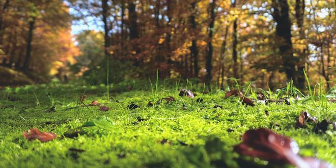 Hoe gezond is jouw grond?