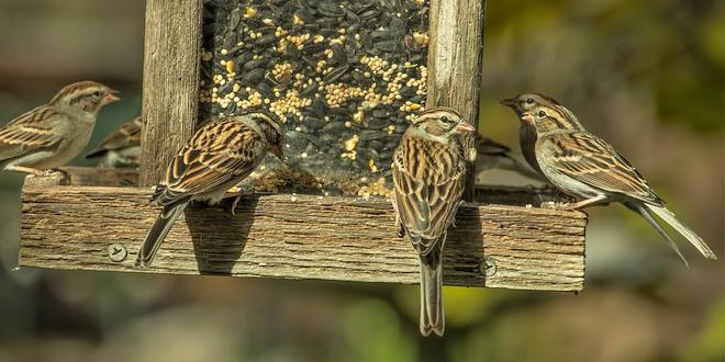 Hoe voeder je de vogels in je tuin mussen