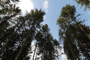 Natuurbeheer in De Uitlegger en Mastenbos