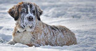 Bevriezen honden in de winter