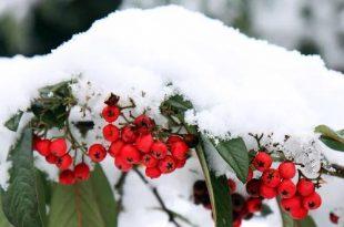 December wat moet er deze maand gebeuren in de tuin