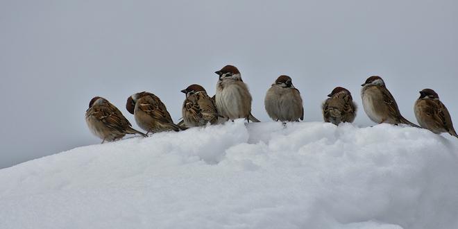 Zo help je de vogels de winter door