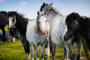 Advies dierenorganisaties Zet paarden in de kou