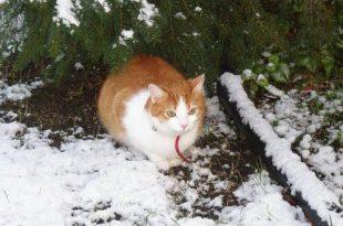 Kat vermist? Maak gebruik van geluid