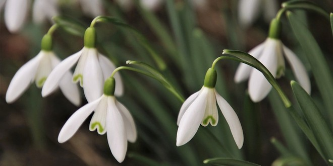 Februari wat moet er deze maand gebeuren in de tuin