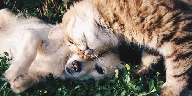 Groene aanslagreiniger Action zeer gevaarlijk voor huisdieren