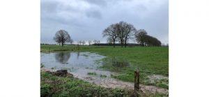 Groenrand wil op Brechtse Heide kleine landschapselementen stimuleren