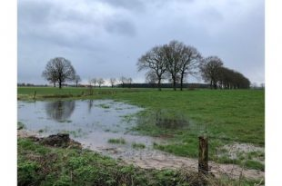 Groenrand wil op Brechtse Heide kleine landschapselementen stimuleren2