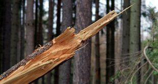 Mijn boom gaat omvallen door de storm wat nu