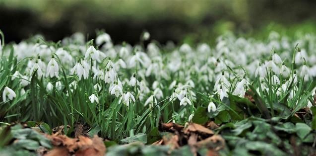 Sneeuwklokjesweekend toont uniek herbarium