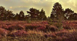 Brandgevaar in bos en heide
