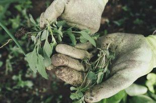 Wat met je tuinafval