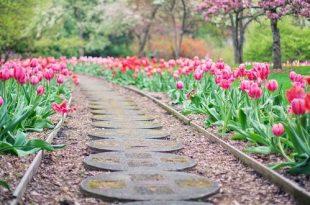April wat moet er deze maand gebeuren in de tuin