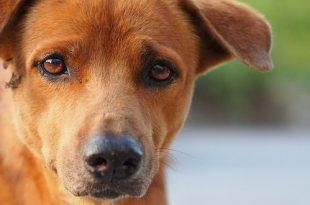 Worden honden depressief na de coronaperiode