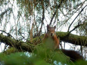 Tuininrichting voor de eekhoorn