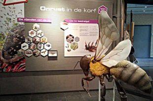 Bijenteeltmuseum Kalmthout opnieuw open vanaf 1 juli