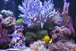 Richard Arnouts - Hobby Zoutwater aquarium - HDB_1604
